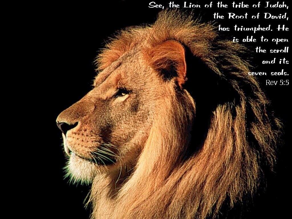 Popular Wallpaper Horse Lion - 87d6f-lion2bof2bjudah  Picture_58212.jpg
